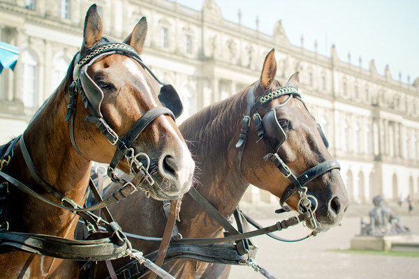 Horse drawn carriage 1157187 1280